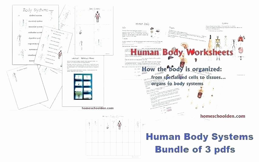 Human Body Systems Matching Worksheet Crossword Puzzle Human Body Worksheet for Grade 1 2 How to N
