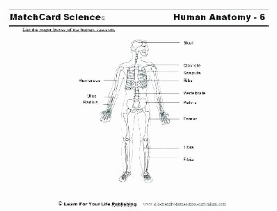 Human Body Systems Matching Worksheet Free Human Body Systems Worksheets Outline Printable Science