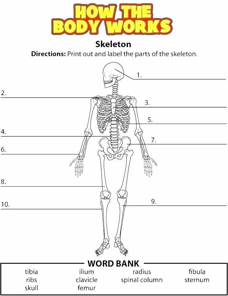 Human Body Systems Matching Worksheet Human Body Systems Matching Worksheet Answers Worksheets
