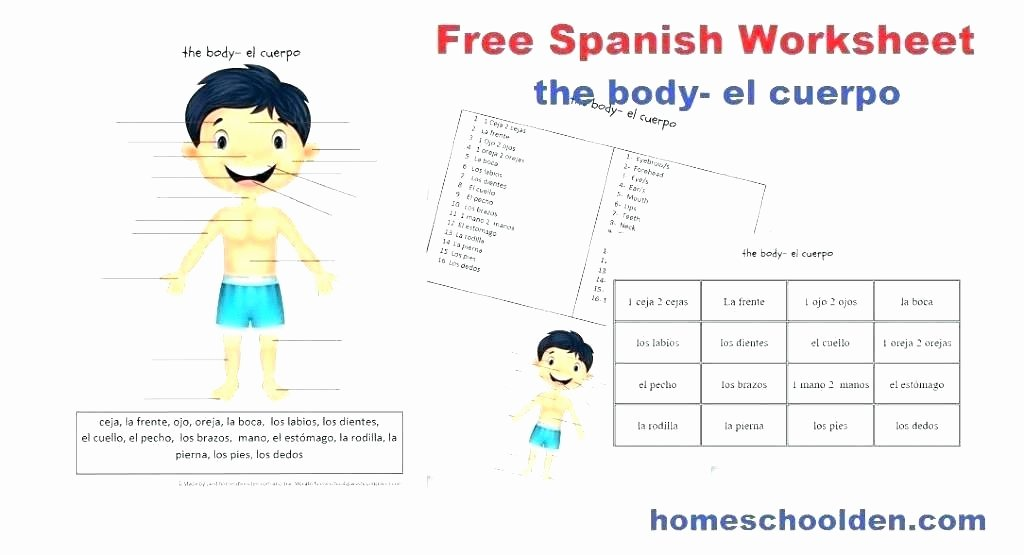 Human Body Worksheets Middle School Body Image Worksheets for Middle School – Onlineoutlet
