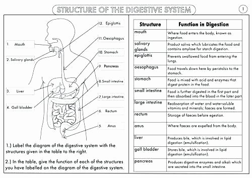 Human Body Worksheets Middle School Body Systems and Functions Worksheets