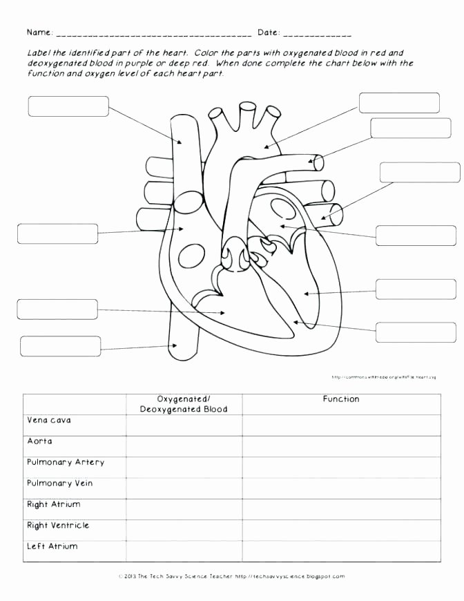 Human Body Worksheets Middle School Body Systems and Functions Worksheets Parts Worksheet