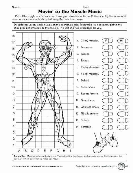 Human Body Worksheets Middle School Body Systems Worksheets Word Search Circulatory System