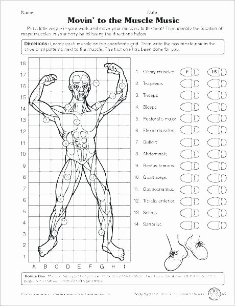 Human Body Worksheets Middle School Human Body Systems for Kids Worksheets Free Human Body