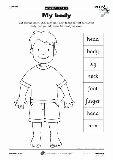 Human Body Worksheets Middle School Human Body Worksheets for Kindergarten Up Healthy Image
