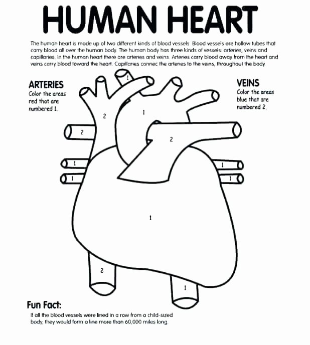 Human Heart Coloring Worksheet Human Heart Coloring Pages – Clo2genfo