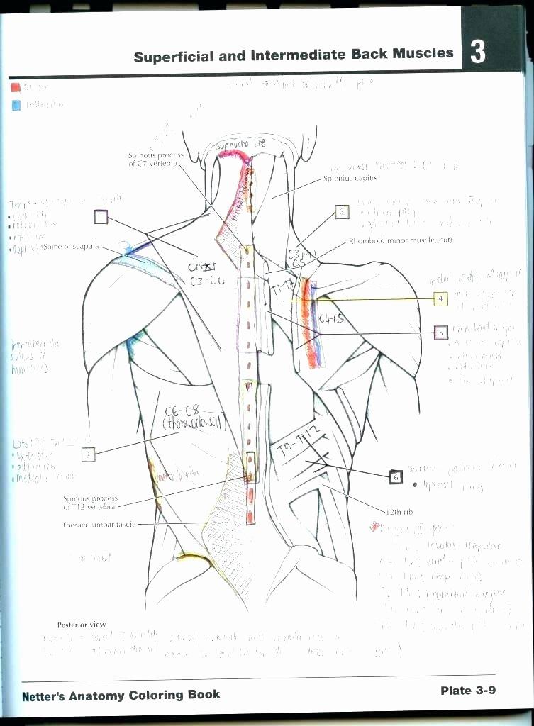 Human Heart Coloring Worksheet Human Heart Worksheets
