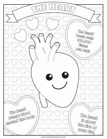 Human Heart Coloring Worksheet Kindergarten Body Worksheets A Big Heart Coloring Page Human