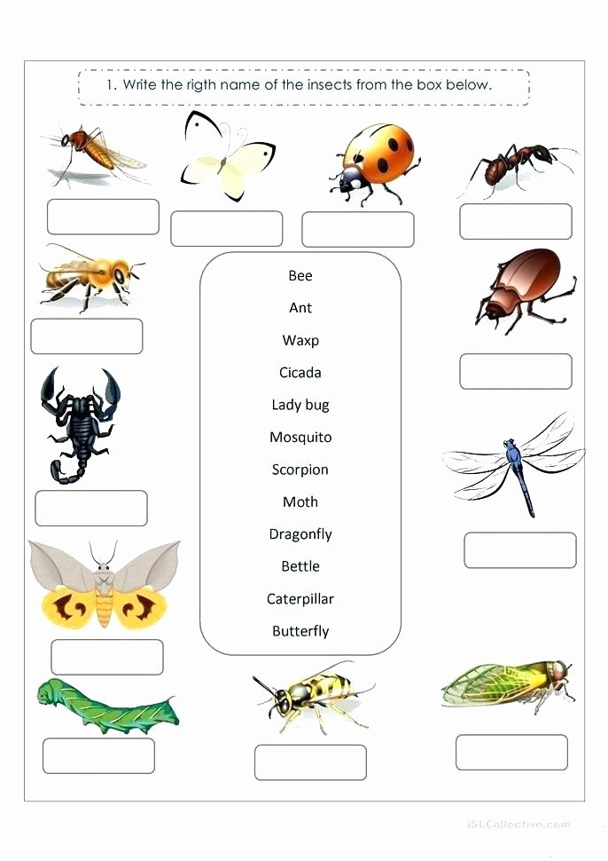 Insect Worksheets for First Grade Free Insect Worksheets for Preschool 4 Grade Grammar