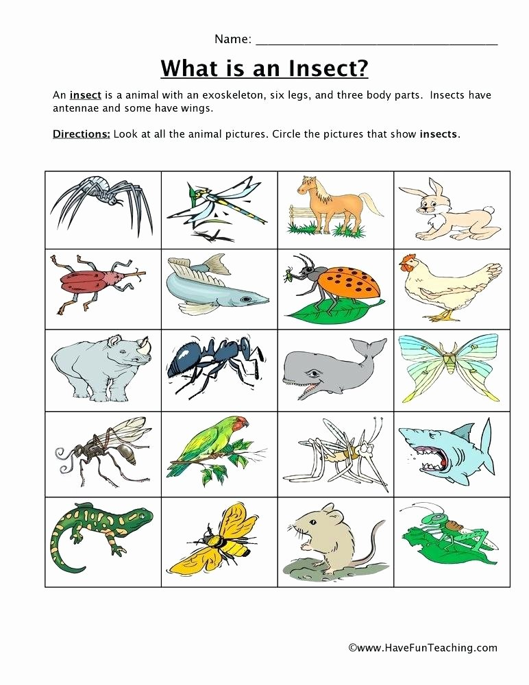 Insect Worksheets for First Grade Insect Worksheets for First Grade Inspirational Best Animals