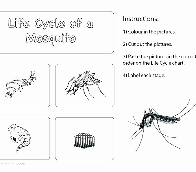 Insect Worksheets for First Grade Insects Worksheet Twisty Noodle Worksheets for 2nd Grade
