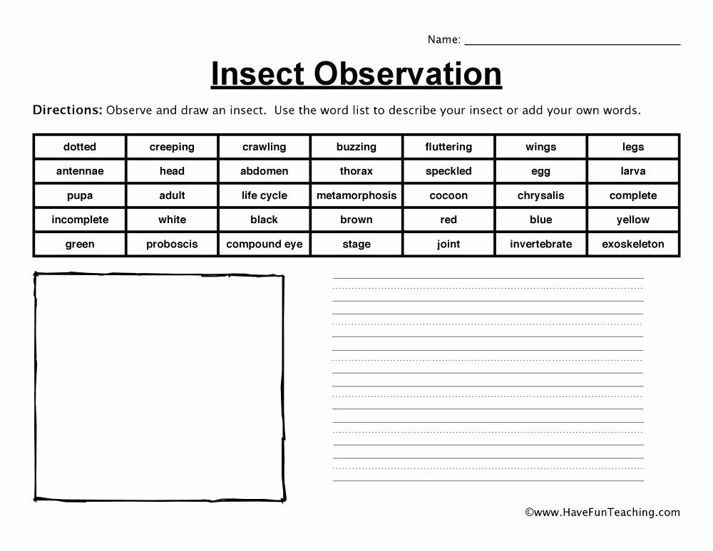 Insect Worksheets for First Grade Resources Science Insects Worksheets Insect Observation