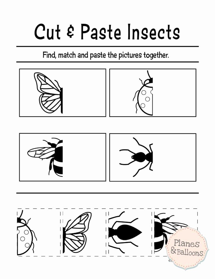 Insect Worksheets for Preschoolers Free Printable Cut and Paste Worksheets for Preschool