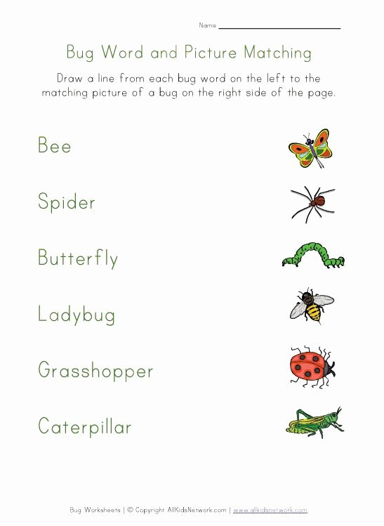 Insects Worksheets for Kindergarten Luxury Insect Worksheets for Kindergarten & Bugs and Insects theme