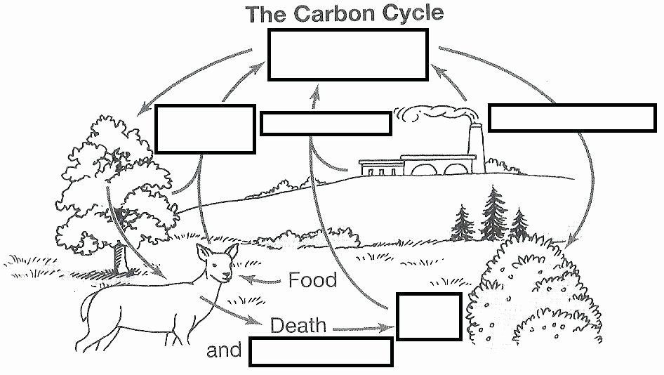 Integrated Science Cycles Worksheet Answers Elegant Water Carbon and Nitrogen Cycle Worksheet Color Sheet