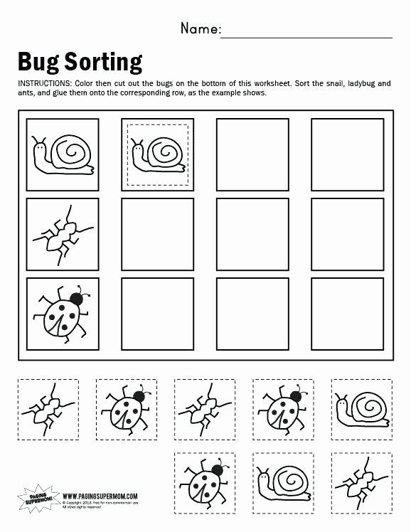 Kindergarten Math sorting Worksheets Kindergarten Math Worksheets Measurement and Data sorting