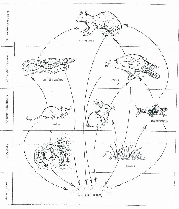 Kindergarten Ocean Worksheets Food Chain Worksheets 3rd Grade – Petpage