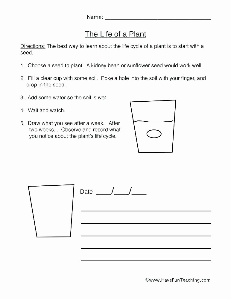 Learning Chinese Worksheets Apple Life Cycle Worksheets – Petpage
