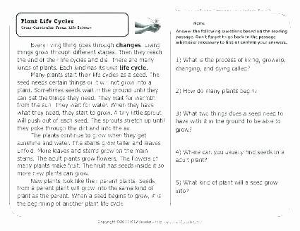 Main Idea Worksheets Grade 1 Main Idea Worksheets Grade 6 Main Idea Worksheets Grade 6