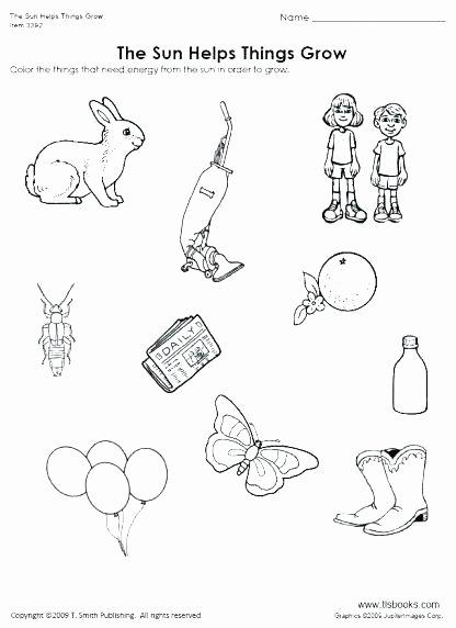 Mammal Worksheets for Kindergarten Pre K Science Worksheets