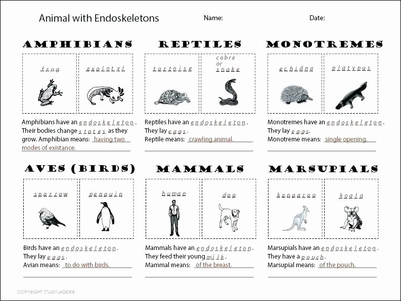 Mammals Worksheet First Grade Free Animal Classification Worksheets