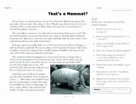 Mammals Worksheet First Grade Grade Main Idea Worksheet About Storms Let Read Second