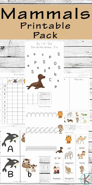 Mammals Worksheet First Grade Mammals Worksheets for Kids