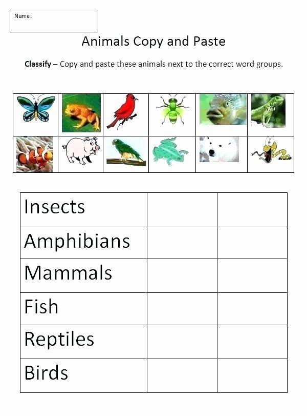 Mammals Worksheets for 2nd Grade Amphibian Worksheets for Second Grade