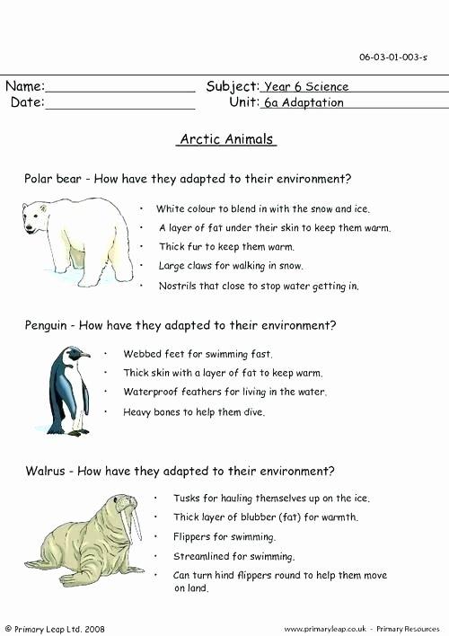 Mammals Worksheets for 2nd Grade E Step Equations Homework Worksheets Skills Practice