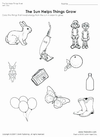Mammals Worksheets for 2nd Grade Macoopenlife