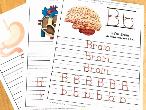 Middle School Health Worksheets Human Body Worksheets for Kindergarten Up Healthy Image