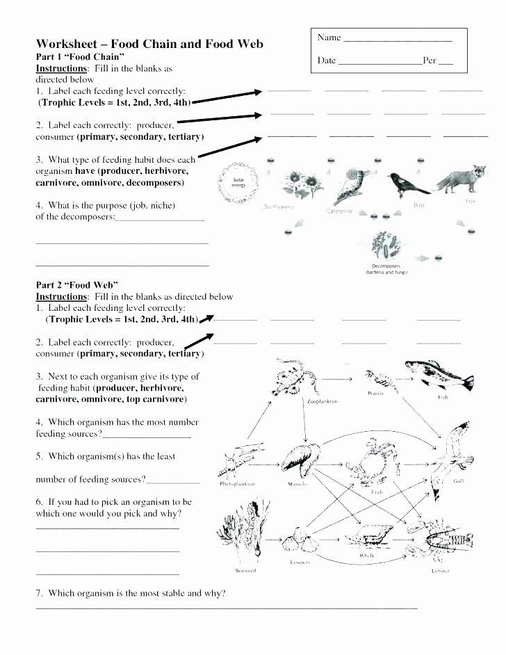 Middle School Science Worksheets Pdf Life Skills Worksheets for Middle School Worksheet Printable