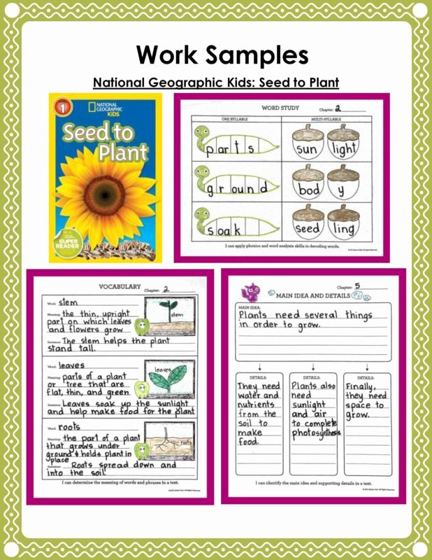 Miss Nelson is Missing Printables Taking Intervention to the Next Level with Authentic Text