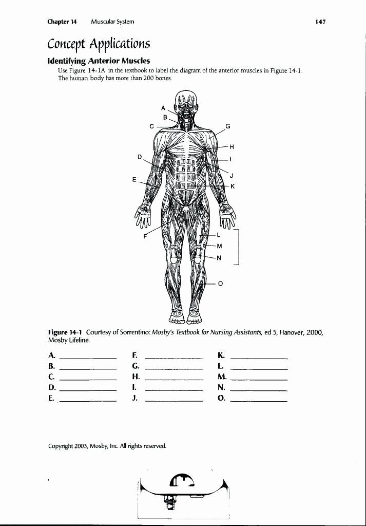 Muscle Diagram Worksheets Diagram Worksheet – Vishalcargopackersmover