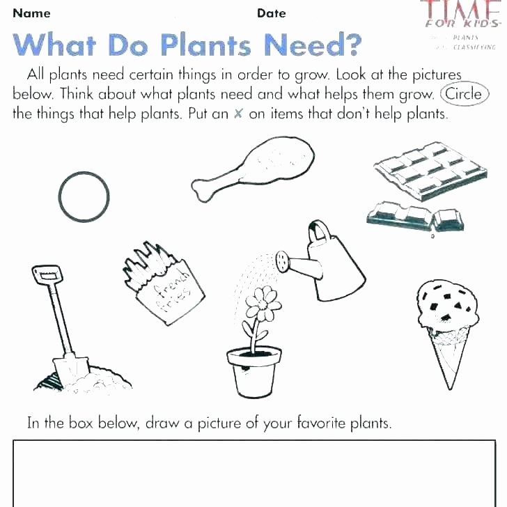My 5 Senses Worksheets Kindergarten Science Worksheets