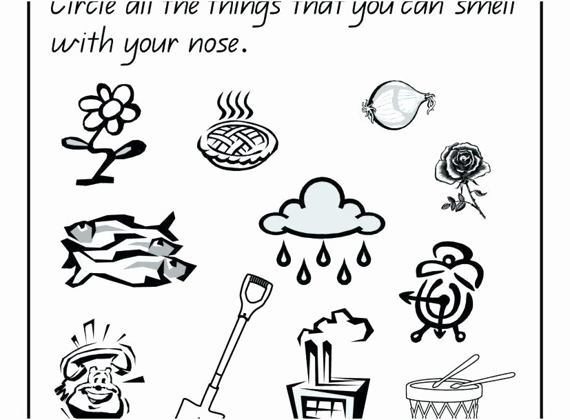 senses coloring pages 5 senses coloring pages pics worksheets for preschoolers the five sense organs page my senses coloring pages