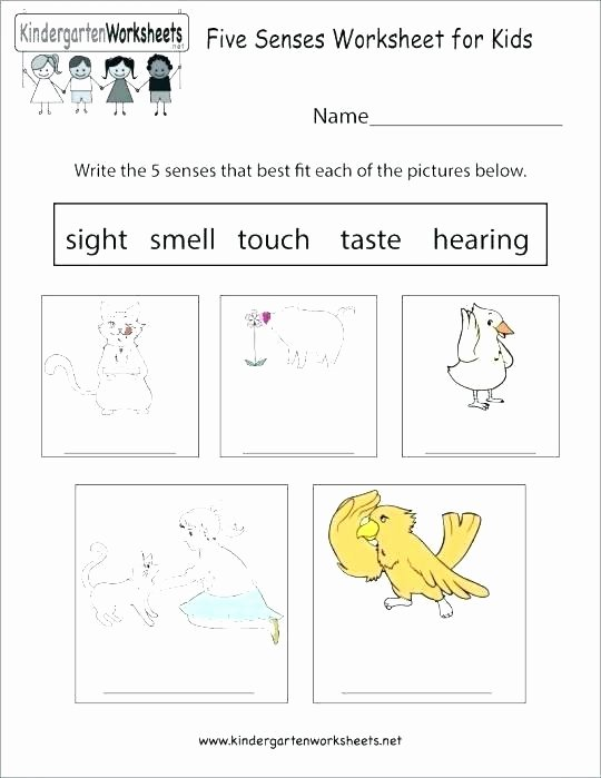 Optical Illusion Worksheets Printable Five Senses Worksheets Activity for Kindergarten and Science