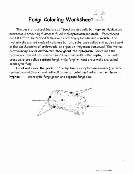 Peter Rabbit Worksheets Biogeochemical Cycles Webquest Answer Key