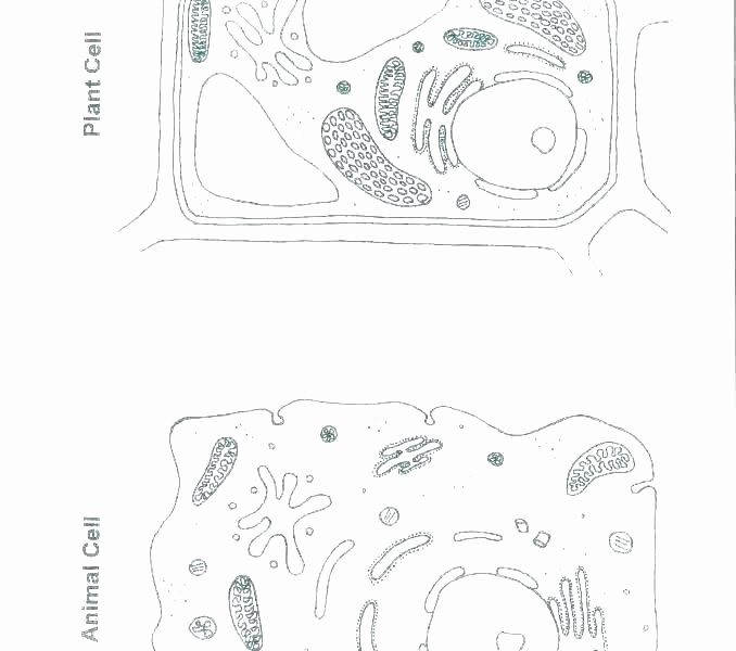 Plant Cell Worksheets to Label Animal Cell Printable – Dstic
