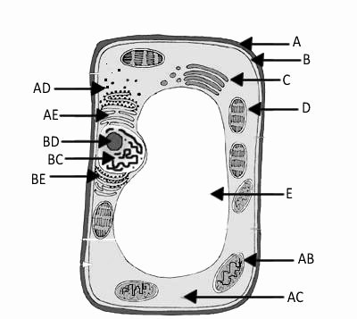 Plant Cell Worksheets to Label Animal Worksheet New 621 Animal Label Worksheet