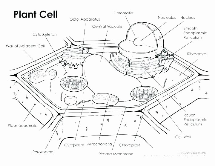 Plant Cell Worksheets to Label Basics Plant Cell Biology Labeled Plant Cell Animal and