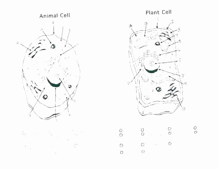 Plant Cell Worksheets to Label Human Cell Coloring Page – Sportingchancefoundation