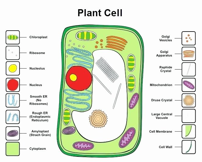 Plant Cell Worksheets to Label Label Plant Cell Worksheet Beautiful Animal Cell Worksheet