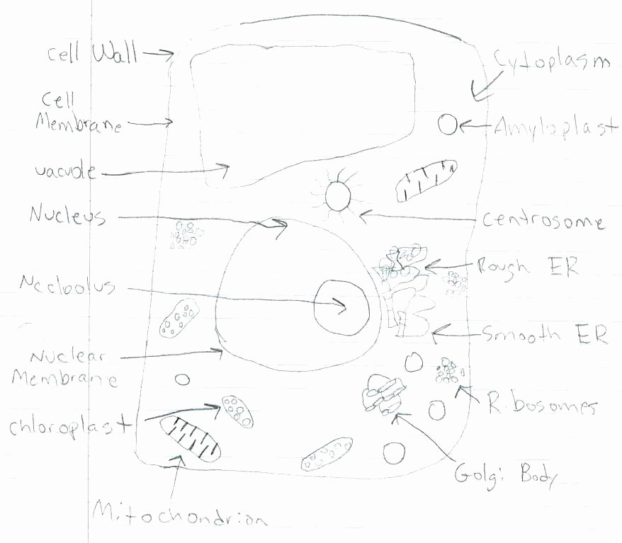 Plant Cell Worksheets to Label Plant Cell Diagram Worksheets – butterbeebetty