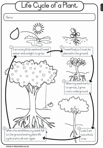 Populations and Communities Worksheet Answers Picture Populations and Ecosystems Worksheets Middle School