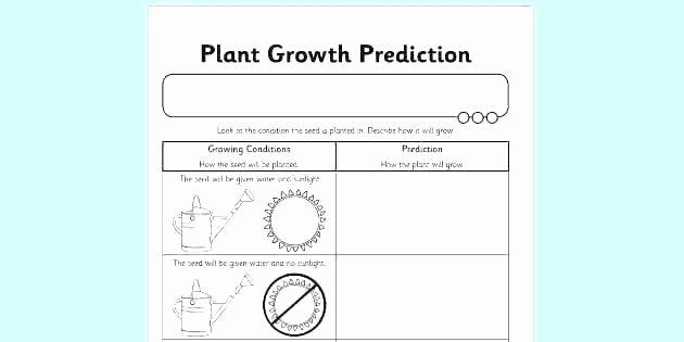 Predictions Worksheets 1st Grade Making Predictions Worksheets 2nd Grade