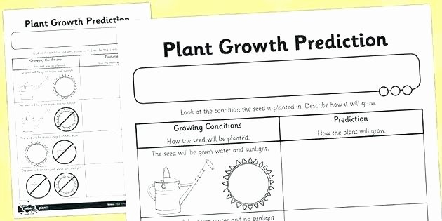 Predictions Worksheets 1st Grade Prediction Worksheets for 5th Grade
