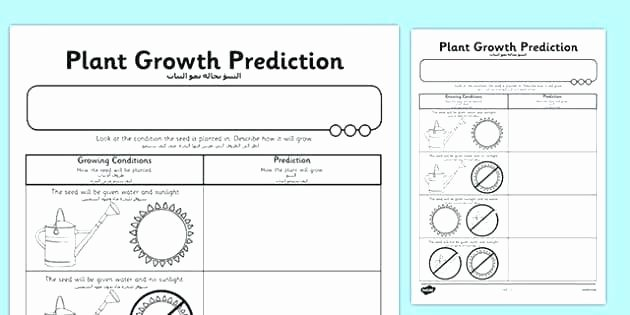Predictions Worksheets 1st Grade Prediction Worksheets for First Grade Living Nonliving Cc