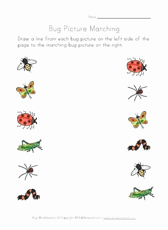 Preschool Bug Worksheets Color Matching Worksheet Preschool Math Worksheets Press