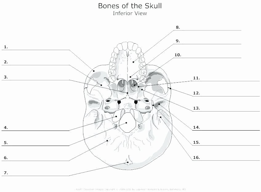Printable Anatomy Labeling Worksheets Best Of Labelimg Download